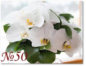 Букет из белых орхидей 50
